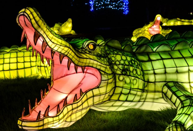 The fury of the animal kingdom is on display in lantern form at the Bronx Zoo's holiday lights