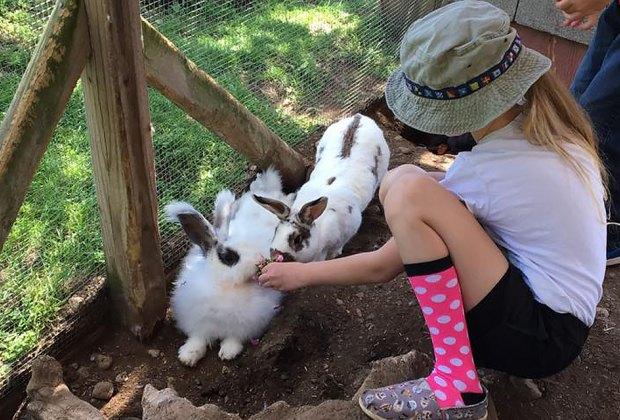 Girl feeding bunnies