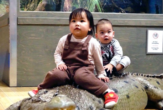 Babies sit on an alligator at the Brooklyn Children's Museum
