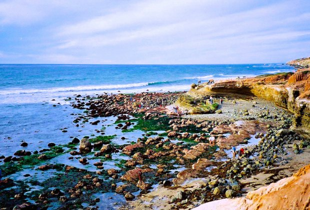 Tide Pools in Cabrillo are wonderful and well protected.