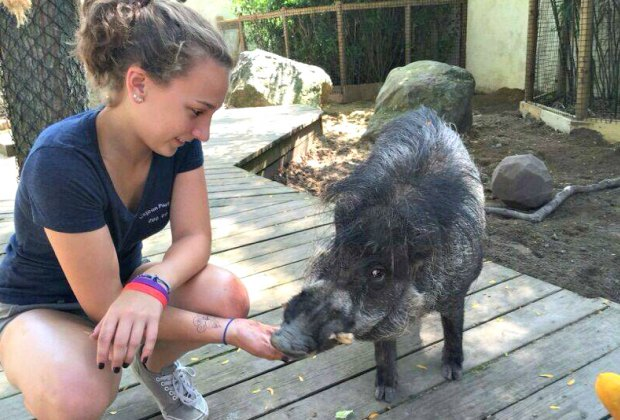 6 Boston-Area Zoos That Aren't in Boston (and Totally Worth