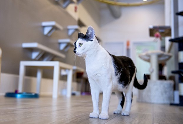 NJ Cat Cafes: Purr-fect for Feline-Loving Kids and Families