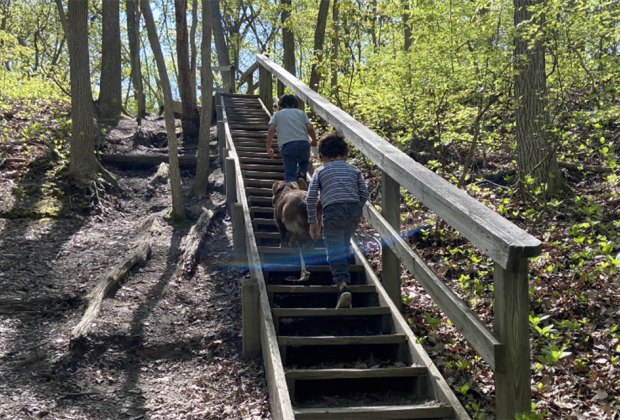 Kids hiking going up a set of stairs in the woods on a New Jersey summer day trip