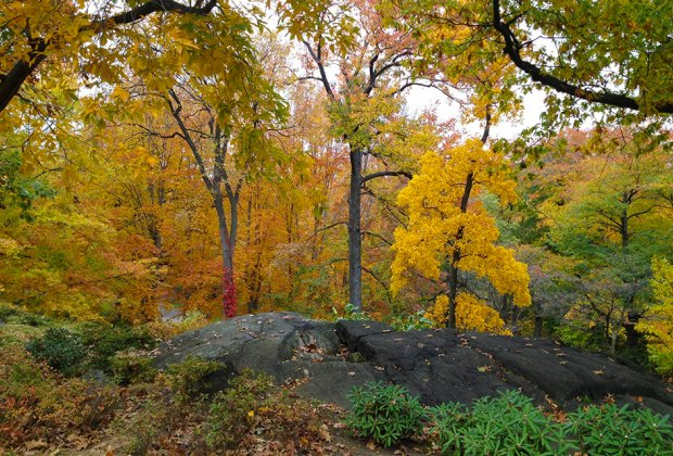 Clark Botanic Garden trees in yellow fall foliage