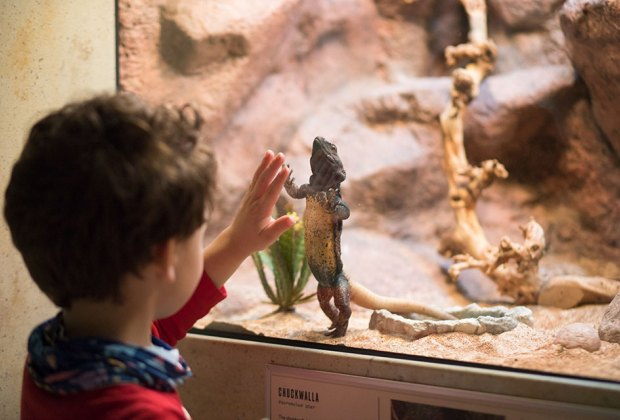 The Best Children's Museum in Every State: Cook Museum of Natural Science