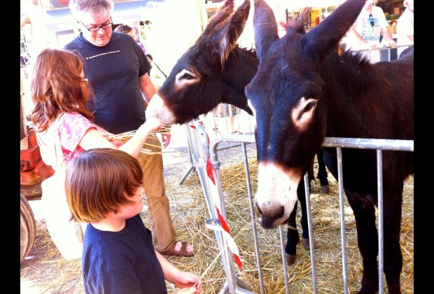 Feeding the donkeys was a highlight of the Fete du Pays