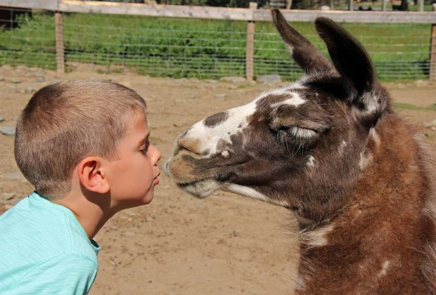Animal Farms and Petting Zoos for Boston Kids | MommyPoppins