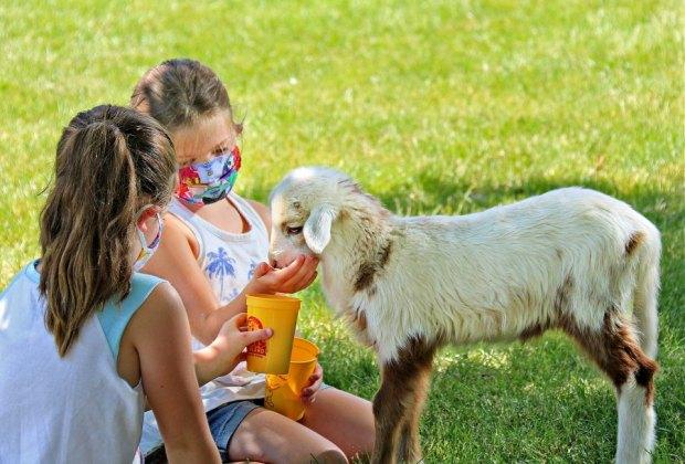 Things To Do with Kids During Spring Break in Boston: Davis Farmland