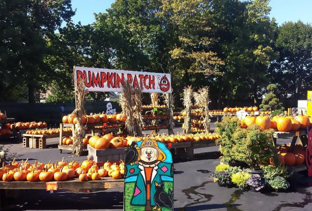 Halloween Festivals 2020 Melville Ny Top Pumpkin Patches and Farms for Long Island Kids | MommyPoppins