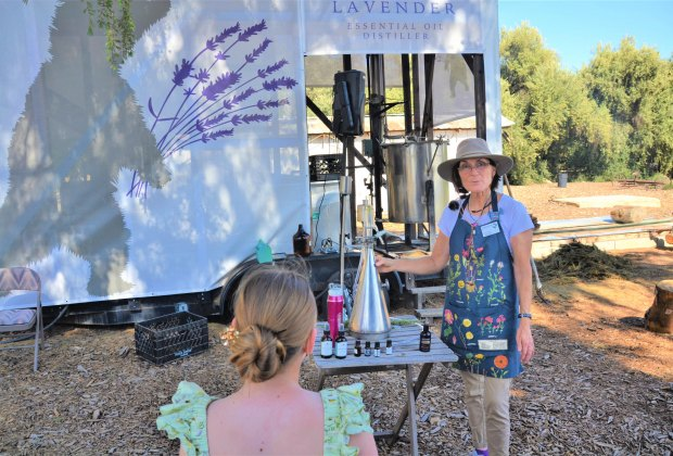 Science at the farm with lavender essential oil making.