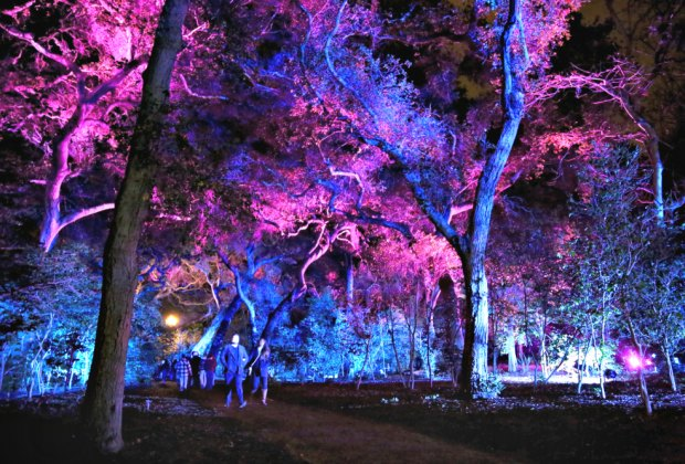 Enchanted Forest Of Light Is Descanso Gardens 39 Christmas Walk In The Woods Mommy Poppins