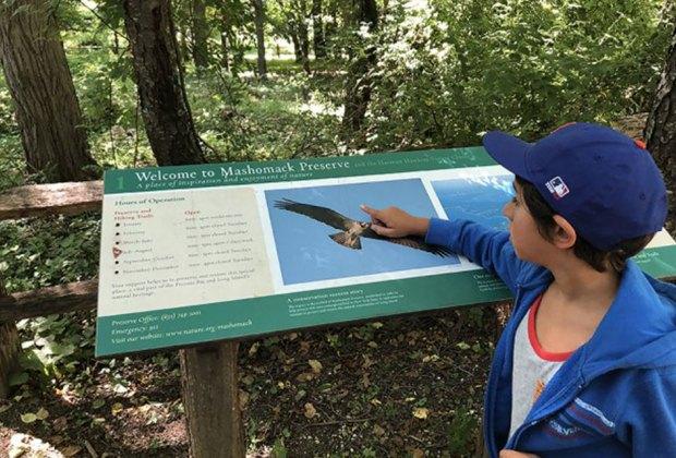 Boy exploring Masomack Preserve