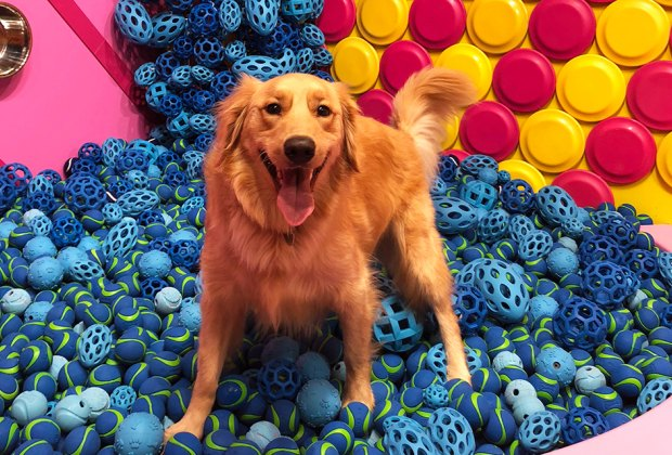 Who's a good boy? Doggos live their best lives in this fun, toy-filled new space.
