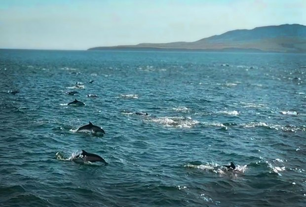 Kayaking California's Channel Islands: So many dolphins!