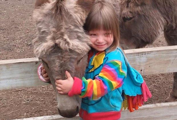 donkey at Flamig Farm