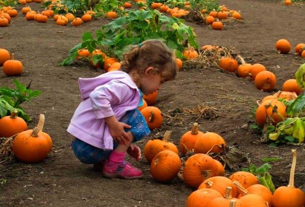The Best Pumpkin Patches near Los Angeles: Pumpkin Picking