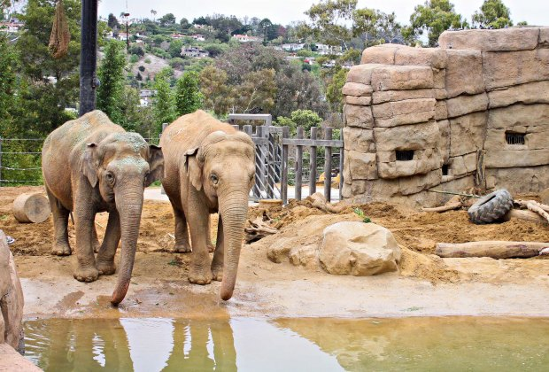 Now open in LA are many of our favorite zoos, like the Santa Barbara Zoo
