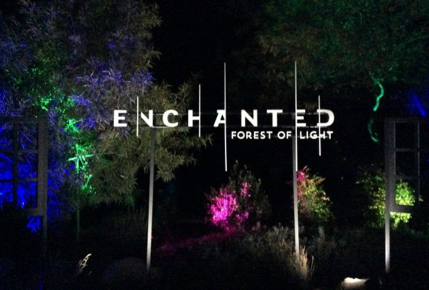 Enchanted forest of light descanso gardens 39 christmas - Descanso gardens enchanted forest of light ...