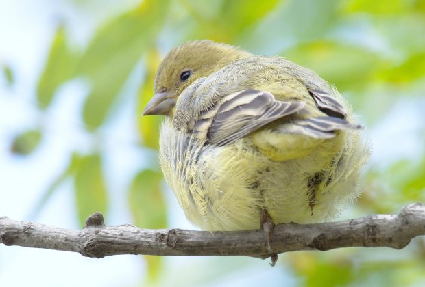 Wildlife Hikes for Kids  in Los Angeles: Watch the birdies at Ernest E. Debs Regional Park.