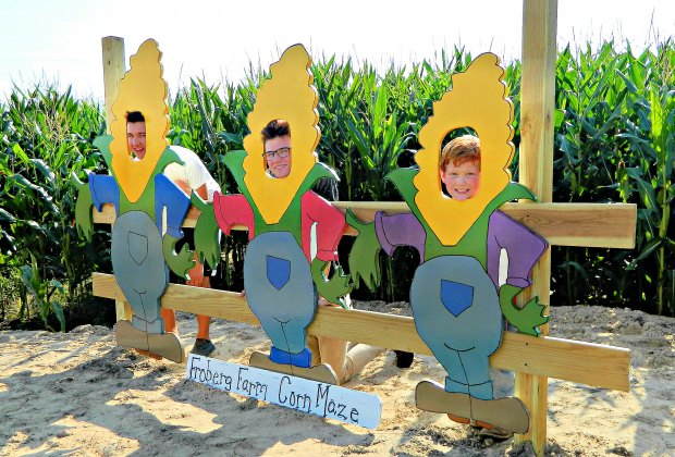 Corn maze at Froberg's Farm