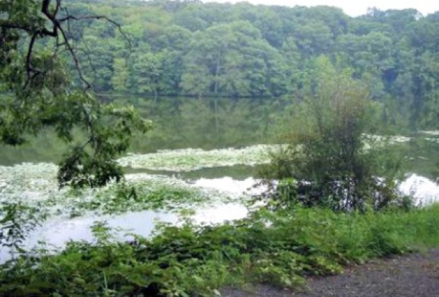 Rockefeller State Park Preserve is austere and inviting