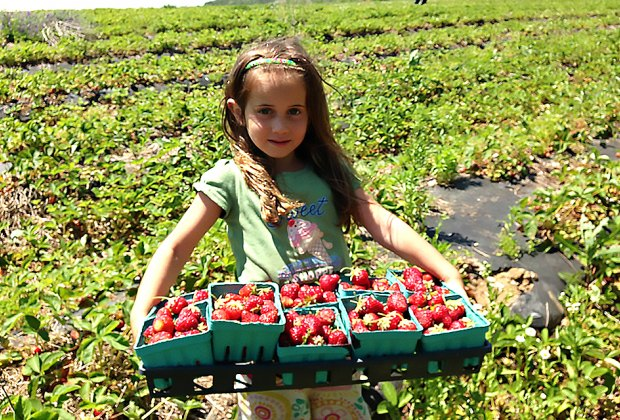 Girl with basket of strawberries at garden of eve