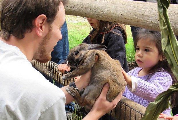Girl petting a bunny rabbit