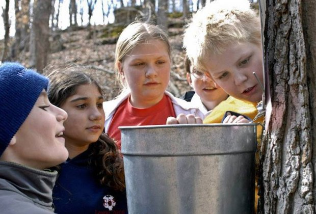 Maple Day is an annual tradition at the Greenwich Land Trust's Mueller Preserve. Photo courtesy of the GLT