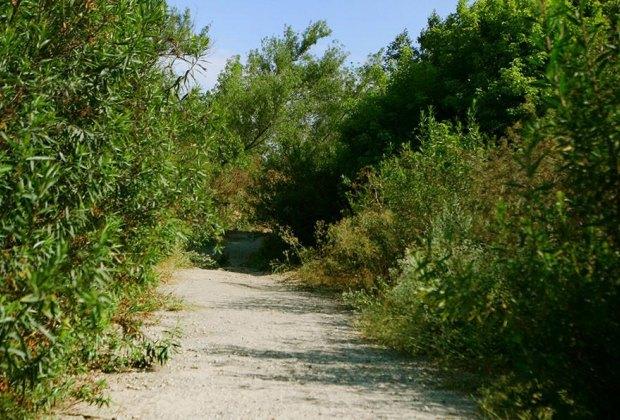 Wildlife Hikes for Kids  in Los Angeles: Hahamonga Watershed Park.