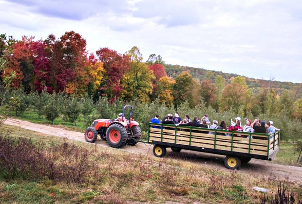 10 Top Apple Picking Orchards And Farms Near Nyc Mommypoppins Things To Do In New York City With Kids