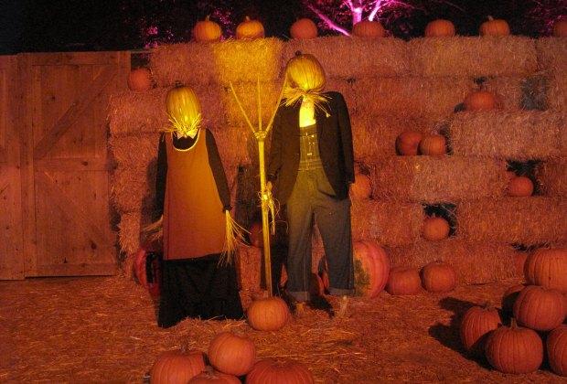 Hauntoween Halloween jack o'lanterns