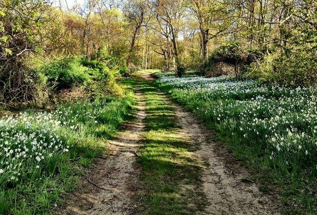 Caumsett State Park trail in spring flowering