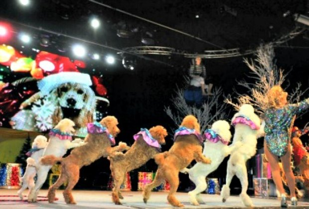 The talented dogs of Holiday Circus. Photo by Nikolai Komissarov