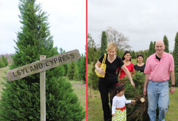 5 Houston Area Farms For Cutting Your Own Christmas Tree ...