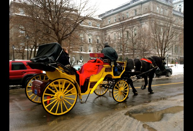 A romantic horse drawn carriage