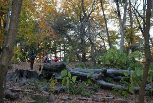 Climbing the huge fallen trees is a highlight