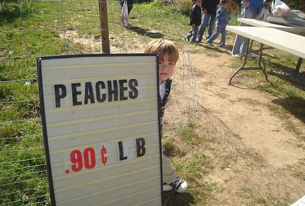 Pick Your Own Fruits In Long Island