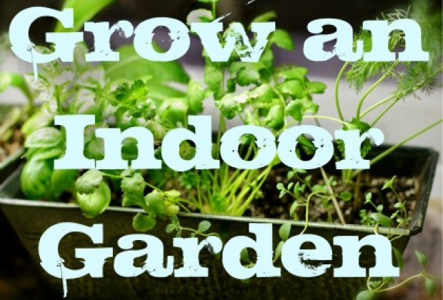 My Apartment Garden: How to Grow an Indoor Herb or Vegetable ...