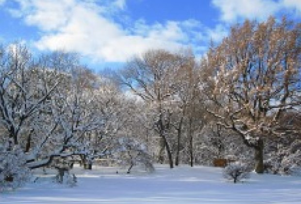 Prospect park and the brooklyn botanic garden in winter for New york winter things to do