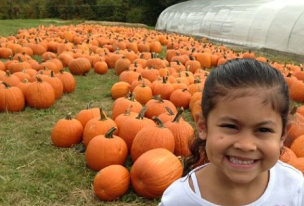 Best Places To Go Pumpkin Picking On Long Island