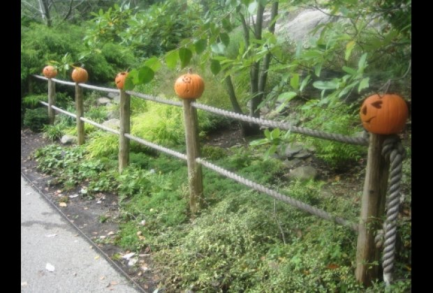 Grinning gourds