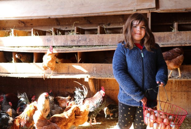Family Friendly Farm Stays Meet The Animals And Work The Farm Mommypoppins Things To Do In New York City With Kids