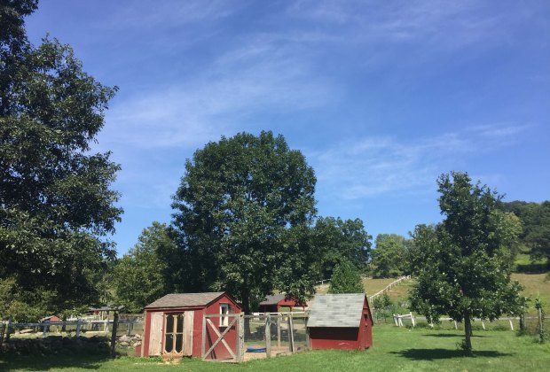 Set on 777 acres in Somers, Muscoot Farm is a sweet spot to visit with young children. Photo courtesy of the farm