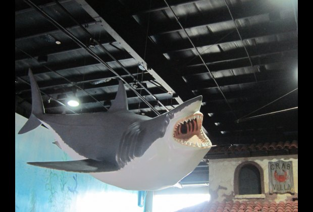 Now THAT's a shark!