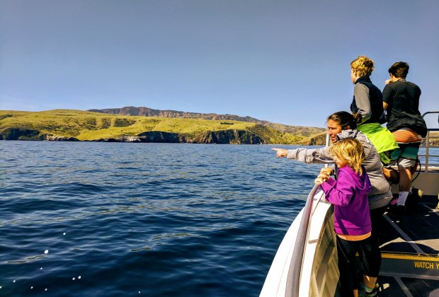 Kayaking California's Channel Islands: Spotting dolphins on the way to the island.