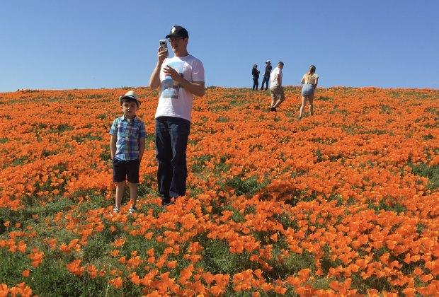 Spring Wildflower Hikes: Poppy Preserves in the Antelope Valley