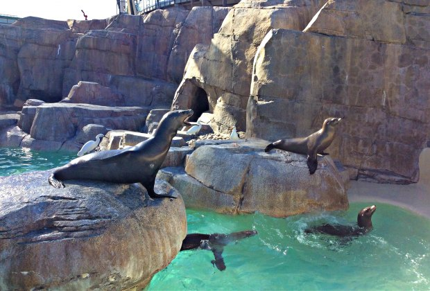 When Are All the Theme Parks Reopening: See sea lions at Sea World