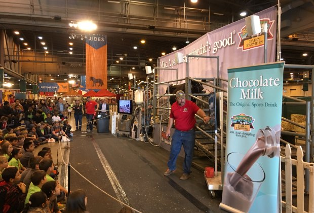 houston livestock show and rodeo seats 15 free things to do with kids at the houston rodeo mommypoppins