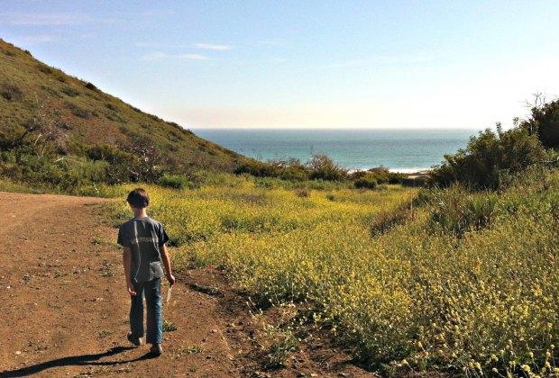 Spring Wildflower Hikes: Ocean vistas and beautiful flowers in the Santa Monica Mountains