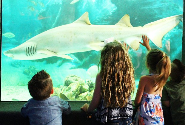 See several species of sharks, stingrays, and more, in Jenkinson's Aquarium's 58,000-gallon tank. Courtesy of the aquarium